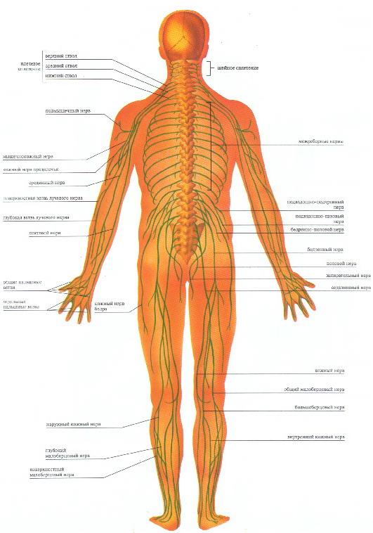 Заболевание периферической нервной системы